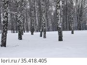 Березы зимой. Стоковое фото, фотограф Илюхина Наталья / Фотобанк Лори