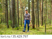 happy man with basket picking mushrooms in forest. Стоковое фото, фотограф Syda Productions / Фотобанк Лори