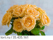 Букет кремовых чайных роз на размытом фоне. Стоковое фото, фотограф Виктор Карасев / Фотобанк Лори