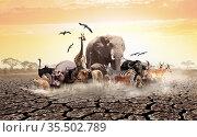 Many African animals on drought desert soil. Стоковое фото, фотограф Сергей Новиков / Фотобанк Лори