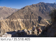 Colca Canyon trek, Peru. Стоковое фото, фотограф Matthew Williams-Ellis / age Fotostock / Фотобанк Лори