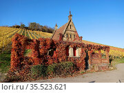 Vineyards in Autumn, View from the Wartberg, Heilbronn, Baden-Württemberg... Стоковое фото, фотограф Zoonar.com/Marc Schmerbeck / easy Fotostock / Фотобанк Лори