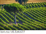 France, Nouvelle Aquitaine, Gironde, wine field by Montagoudin, Entre... Стоковое фото, фотограф J.D. Dallet / age Fotostock / Фотобанк Лори