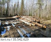 Вырубленная древесина, складированная у дорожной колеи в лесу. Стоковое фото, фотограф Бабкина Марина / Фотобанк Лори