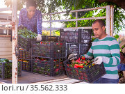 Man and woman load boxes of ripe bell peppers into the back of truck. Стоковое фото, фотограф Яков Филимонов / Фотобанк Лори
