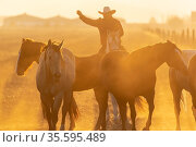 A herd of horses running through a field on a Mexican Ranch at sunrise. Стоковое фото, фотограф Zoonar.com/Walter G Arce Sr ASP Inc / easy Fotostock / Фотобанк Лори