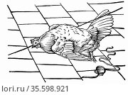 Experimentum Mirabile. From Athanasius Kircher 'Physiologia Kircheriana... Редакционное фото, агентство World History Archive / Фотобанк Лори