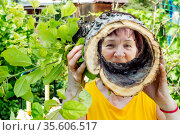 beautiful mature woman shows an unusual piece of trunk with a large through hole in the garden on a summer day.woman looks through the hollow, focus on the face. Стоковое фото, фотограф Акиньшин Владимир / Фотобанк Лори
