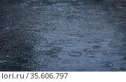 Rain drops falling in pool. Стоковое фото, фотограф Юрий Бизгаймер / Фотобанк Лори
