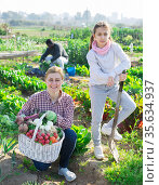 Portrait of a young woman with a teenage girl in the vegetable garden with a basket of crops. Стоковое фото, фотограф Яков Филимонов / Фотобанк Лори