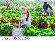 Portrait of a teenage girl with a basket of crops on the vegetable garden. Стоковое фото, фотограф Яков Филимонов / Фотобанк Лори