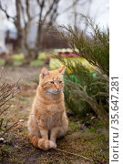 Red cat on porch on walk in garden in spring. Стоковое фото, фотограф Дарья Филимонова / Фотобанк Лори