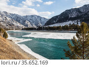 View on the Katun river flows among the Altai Mountains in winter on a sunny day . Altai Republic, Russia. Стоковое фото, фотограф Наталья Волкова / Фотобанк Лори