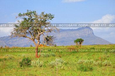 Trees in an African savanna