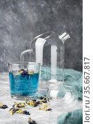 Organic blue tea Anchan, Clitoria, Butterfly Pea in a teapot and a cups. Стоковое фото, фотограф Александр Иванов / Фотобанк Лори