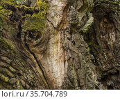 Old tree. Стоковое фото, фотограф Piotr Ciesla / age Fotostock / Фотобанк Лори