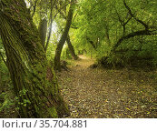 "Poland. Lubelski region. Nature Reserve Szwjcaria Podlaska/""Podlaska... Стоковое фото, фотограф Piotr Ciesla / age Fotostock / Фотобанк Лори"