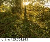 Poland. Podlasie Region. Bialowieza National Park. Стоковое фото, фотограф Piotr Ciesla / age Fotostock / Фотобанк Лори