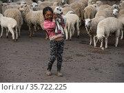 Indigenous child and lamb, Pulingue San Pablo community, Chimborazo Province, Andes, Ecuador. July 2016. Стоковое фото, фотограф Pete Oxford / Nature Picture Library / Фотобанк Лори