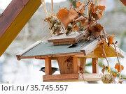 Vogel, Meise, Kohlmeise, Füttern, Vogelfutter, Vogelhäuschen, Winter. Стоковое фото, фотограф ROHA-Fotothek Fuermann / age Fotostock / Фотобанк Лори