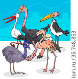 Cartoon Illustration of Wild Comic Birds Animal Characters Group. Стоковое фото, фотограф Zoonar.com/Igor Zakowski / easy Fotostock / Фотобанк Лори