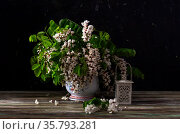 Still life with delicate acacia tree with white clusters. Стоковое фото, фотограф Татьяна Ляпи / Фотобанк Лори