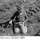 Child of white migrant berry worker picking strawberries near Ponchatoula, Louisiana. By Russell Lee, 1903-1986, photographer Date 19390101. Редакционное фото, агентство World History Archive / Фотобанк Лори