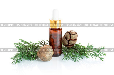 Cypress essential oil isolated on white background. Cypress oil on...