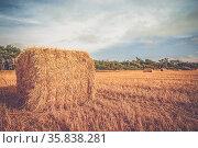 Rural landscape with straw bales on a countryside field. Стоковое фото, фотограф Zoonar.com/Kasper Nymann / age Fotostock / Фотобанк Лори