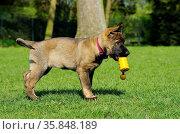 ZON-5945788. Стоковое фото, фотограф Zoonar.com/Kerstin Hennig / age Fotostock / Фотобанк Лори