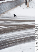 Tire track on the road covered by snow with crow at winter. Стоковое фото, фотограф Zoonar.com/Oliver Sved / age Fotostock / Фотобанк Лори