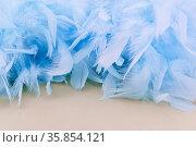 Viele blaue Dekoration Federn als Hintergrund Textur Header. Стоковое фото, фотограф Zoonar.com/Robert Kneschke / age Fotostock / Фотобанк Лори