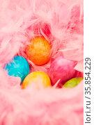 Viele bunte Ostereier liegen zu Ostern in einem Nest aus rosa Federn... Стоковое фото, фотограф Zoonar.com/Robert Kneschke / age Fotostock / Фотобанк Лори