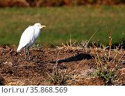 Reiher im Lower Zambezi Nationalpark, Sambia, egret at Lower Zambezi... Стоковое фото, фотограф Zoonar.com/W. Woyke / age Fotostock / Фотобанк Лори