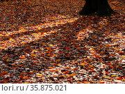 Fallen leaf. Стоковое фото, агентство Ingram Publishing / Фотобанк Лори