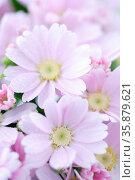 Pink flowers. Стоковое фото, агентство Ingram Publishing / Фотобанк Лори