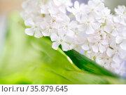 Closeup ofwhite flowers. Стоковое фото, агентство Ingram Publishing / Фотобанк Лори