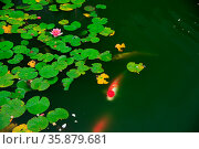 Water lily. Стоковое фото, агентство Ingram Publishing / Фотобанк Лори