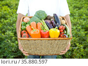 Vegetables. Стоковое фото, агентство Ingram Publishing / Фотобанк Лори