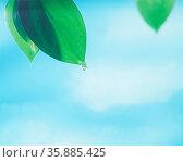 Leaf with dew drop. Стоковое фото, агентство Ingram Publishing / Фотобанк Лори