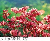 flower. Стоковое фото, агентство Ingram Publishing / Фотобанк Лори