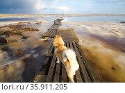 Верный пес ждет хозяина на берегу. Стоковое фото, фотограф Яковлев Сергей / Фотобанк Лори