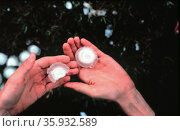 large pieces of hail from severe thunderstorm. Редакционное фото, агентство World History Archive / Фотобанк Лори