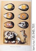 Entwicklung eines Vogels' by Matthias Jakob Schleiden. Редакционное фото, агентство World History Archive / Фотобанк Лори