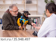 Young male doctor vet examining dog in the clinic. Стоковое фото, фотограф Elnur / Фотобанк Лори