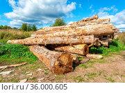 Broken old cut tree logs piled up near a forest road in sunny summer... Стоковое фото, фотограф Zoonar.com/Alexander Blinov / easy Fotostock / Фотобанк Лори