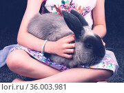A beautiful lop rabbit being held by a young girl in a home environment... Стоковое фото, фотограф Zoonar.com/Chris Putnam / easy Fotostock / Фотобанк Лори
