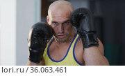 Portrait of caucasian male trainer wearing boxing gloves training at the gym. Стоковое видео, агентство Wavebreak Media / Фотобанк Лори