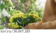 Smiling caucasian woman repotting yellow flowers in sunny garden. Стоковое видео, агентство Wavebreak Media / Фотобанк Лори