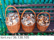 three large wicker baskets full of mushrooms stand on a bench near a village house on an autumn sunny day. Стоковое фото, фотограф Акиньшин Владимир / Фотобанк Лори